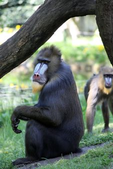 Free Monkeys Stock Image - 4954601