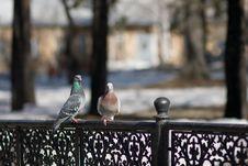Free Birds Royalty Free Stock Photos - 4955318
