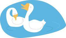 Free Two Swan On Lake Stock Image - 4957001