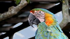 Free Portrait Of A Parrot Royalty Free Stock Photos - 4957098