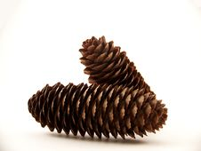 Two Pinecones Royalty Free Stock Photography