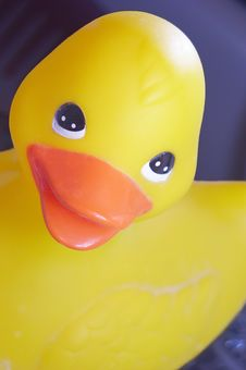 Free Hello Ducky Royalty Free Stock Photos - 4959158