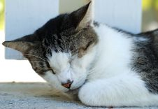 Free The Sleeping Cat Stock Photography - 4959232