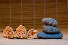 Free Still Life Royalty Free Stock Photo - 4959265