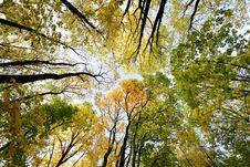 Free Background Autumn Trees Royalty Free Stock Photo - 49501475