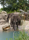 Free Two Elephants By Stream Royalty Free Stock Photos - 4963508