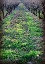 Free Winter Vines Royalty Free Stock Photos - 4967848