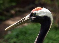 Free Heron Stock Images - 4960054
