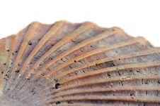 Free Seashell Stock Photos - 4960233