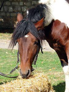 Free Horse Stock Image - 4960311