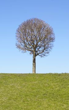 Free Lonely Tree Royalty Free Stock Images - 4960599
