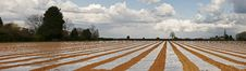 Free Stripey Field Panorama Royalty Free Stock Photos - 4960668