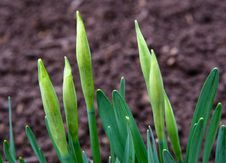 Free Growing Plant Stock Images - 4960904