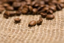 Freshly Roasted Coffee Beans On Sackcloth Stock Images