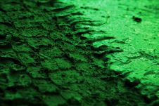 Closeup Of Tire Tracks In The Green Mud Stock Photos