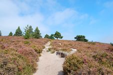 Free Path Through Heather To The Woods Royalty Free Stock Image - 4961396