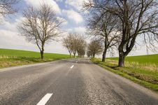 Road With Tree Alley Stock Images