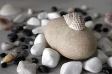 Shells And Stones Royalty Free Stock Photo
