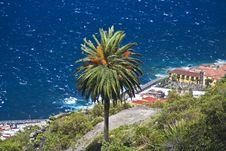 Free Palm Tree On The Shore Tenerife Royalty Free Stock Photos - 4962668