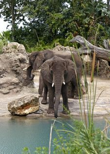 Two Elephants By Stream Royalty Free Stock Photos