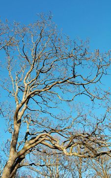 Free Winter Tree Branches Stock Photo - 4963740