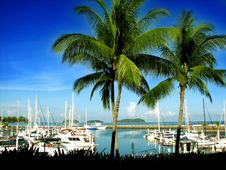 Free Yachts With Coconut Trees Royalty Free Stock Image - 4963826