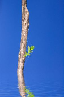 Dry Branch With Green Leaves Royalty Free Stock Photos