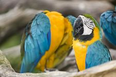 Free Beautiful Parrot Stock Photography - 4964042