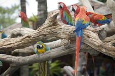 Free Beautiful Parrot Royalty Free Stock Images - 4964059