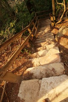 Stair Steps In Nature Forest Stock Images