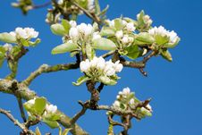 Free Flowering Time. Stock Photos - 4964973