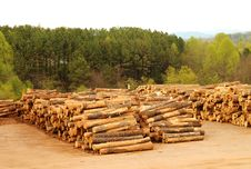 Free Lumberyard With Stacks Of Logs Stock Photography - 4965162