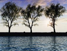 Free Tree Line Stock Photos - 4965183