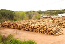 Free Lumberyard With Stacks Of Logs Royalty Free Stock Photo - 4965205