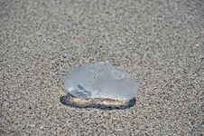 Free Closeup Of Beached Clear Jellyfish Royalty Free Stock Photography - 4967007