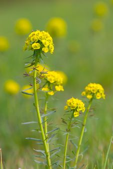 Free Yellow Wildflowers Field Stock Images - 4967504