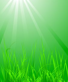 Free Green Grass In The Light Royalty Free Stock Image - 4967636