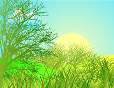 Free Spring Landscape With Green Grass And Blue Sky Royalty Free Stock Photography - 4967937