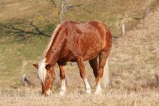 Free Horse Stock Photo - 4967950