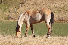 Free Horse Royalty Free Stock Photo - 4968365