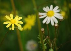 Free Yellow Flowers Stock Photography - 4968662