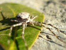 Free White Spider Royalty Free Stock Photos - 4969128