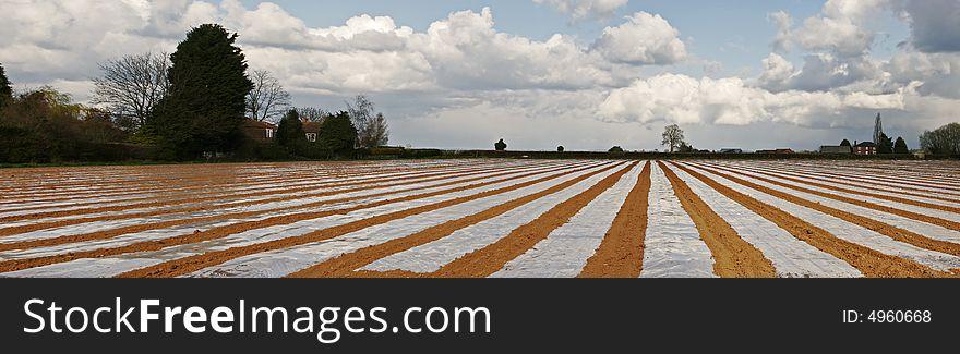 Stripey field panorama