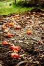 Free Autumn S Fall Royalty Free Stock Photos - 4973338