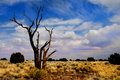 Free Lone Tree Stock Image - 4974051