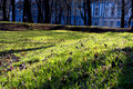 Free Young Green Spring Grass Royalty Free Stock Photos - 4974818
