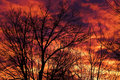 Free Morning Sunrise Silhouette Royalty Free Stock Photo - 4975085
