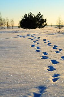 Human Foot Prints In Snow Royalty Free Stock Photography