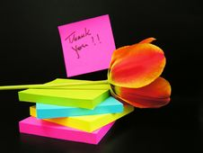 Free Thank You Message And Red Tulip On Black Background Stock Photography - 4971172