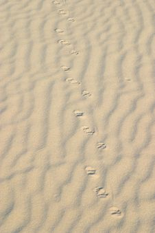 Free Tracks In The Sand Royalty Free Stock Photography - 4972967